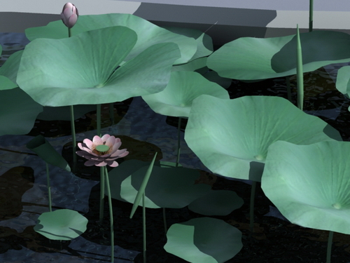 Lotus Leaves Flowers 3d Model Download Free 3d Models