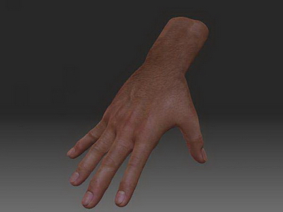3Ds Max Model: Body Part Model, hand