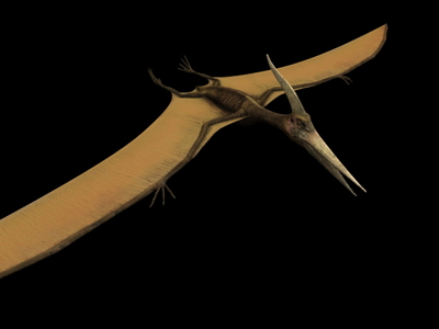 Animal Model: Pteranodon Dinosaur 3dS Max Model