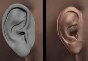 Human Body Part 3d Model: EARS 3DS MAX Model