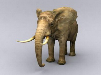 Fine Elephant Model 3d Model Download Free 3d Models Download