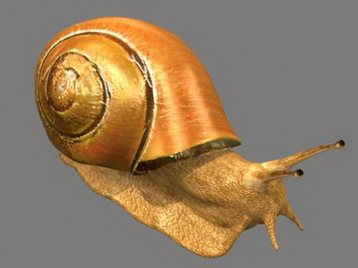 3d Model Of Snail 3d Model Download Free 3d Models Download