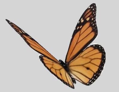 Multiple Beautiful Butterfly 3d Model 3d Model Download