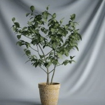 Plant Bonsai Series - small tree 3D models (including materials)