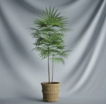 Plant Bonsai Series - 3D Model of tree leaves (including materials)