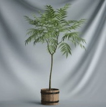 Bonsai Plants Series - Tree 3D model (including materials)