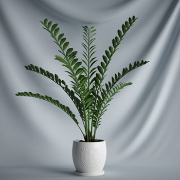 3d model of indoor potted