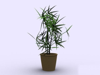 Indoor potted bamboo model