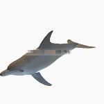 Cute dolphin 3d models