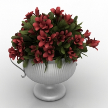 beautiful model potted flowers
