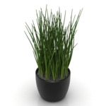 indoor potted model grass