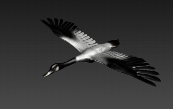 Open wings of the Swan 3D model