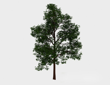 Forest green high tree 3d model