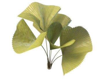 Ginkgo biloba simulation model