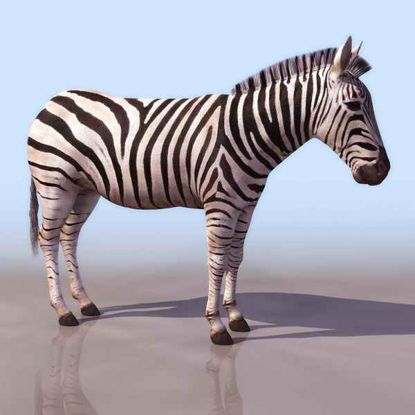 Zebra Animals 4 3d Model Download Free 3d Models Download