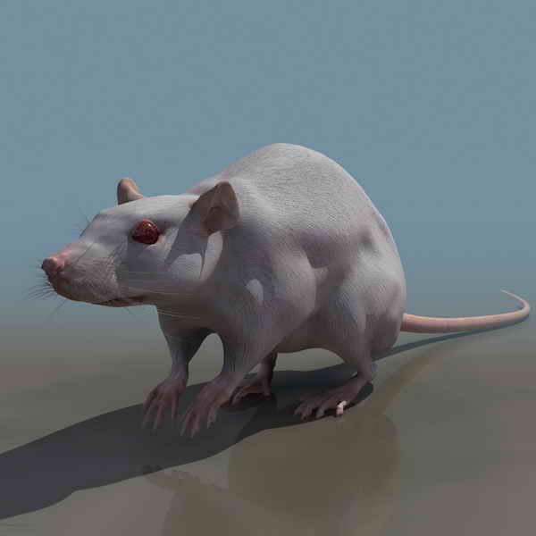 Mouses Animals 19 3d Model Download Free 3d Models Download