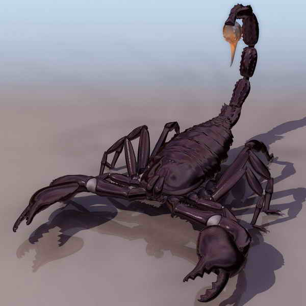Scorpion Animals 11 3d Model Download Free 3d Models Download