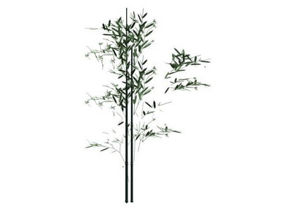 Plant 001 Bamboo 3d Model Download Free 3d Models Download