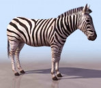 Zebra animals  4