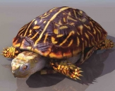 Turtles  animals  6