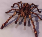 Spider  animals  9