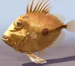 fish  animals  12