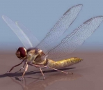 Dragonflies animals  30