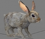 3D model of a small hare